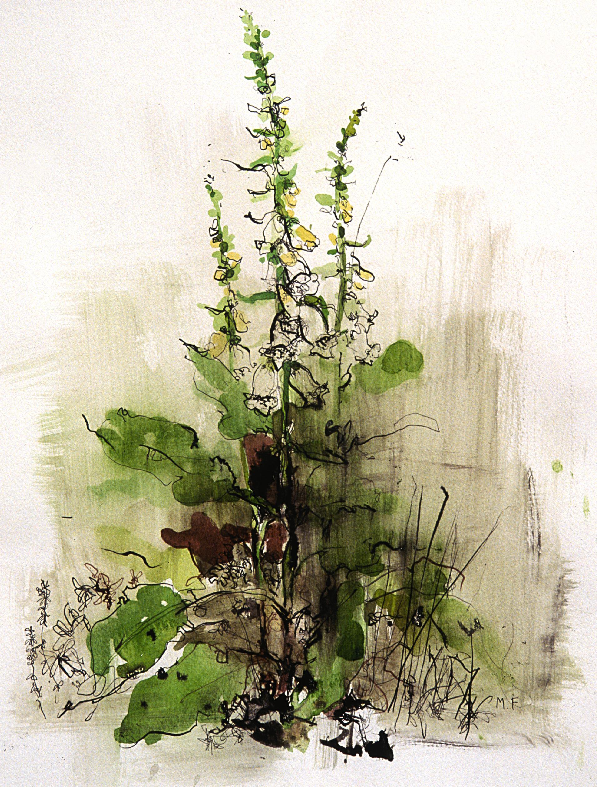 hedgerow.jpg