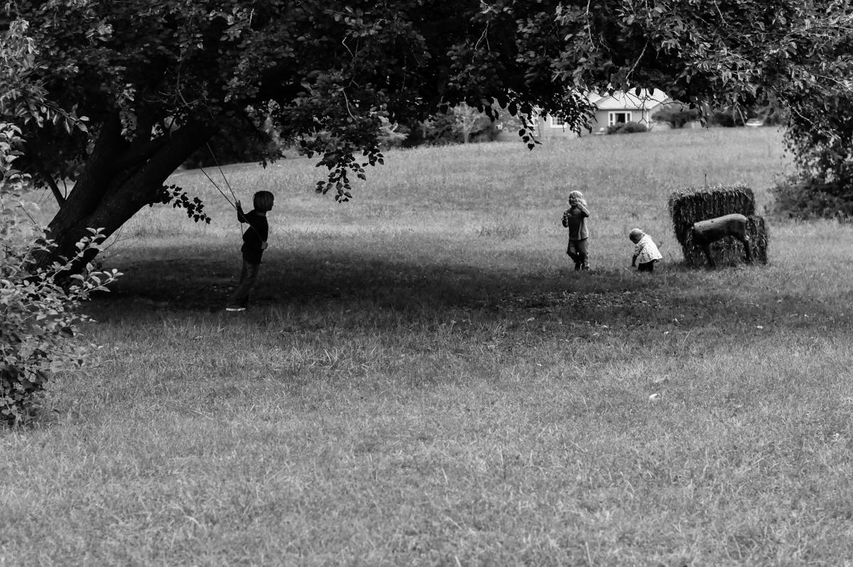 farm scenes.jpg