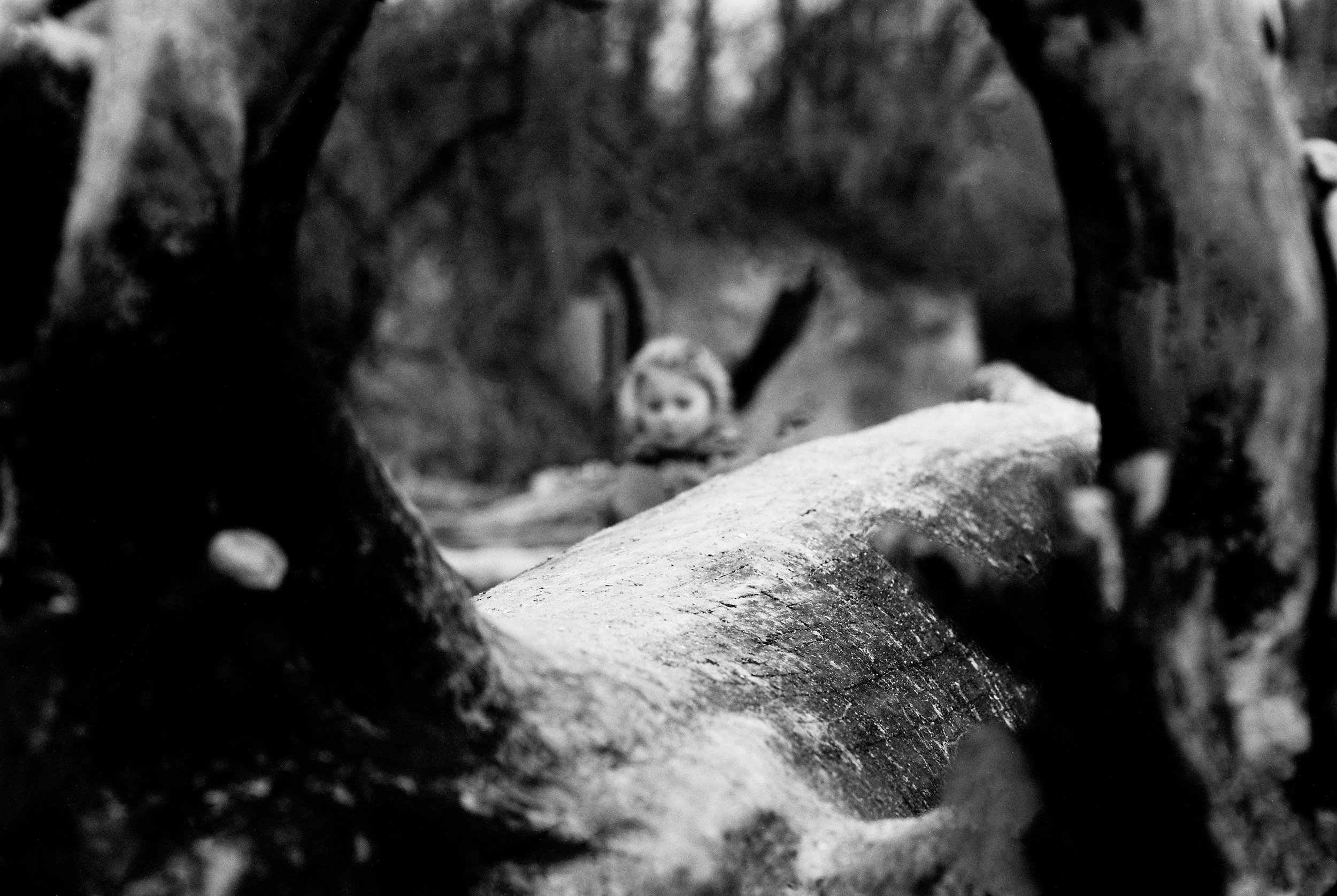 february-film-lifestyle arlo behind the log.jpg