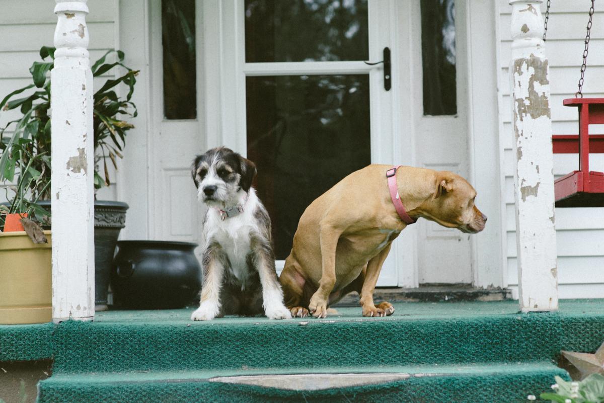 jen poteet resize porch dogs.jpg