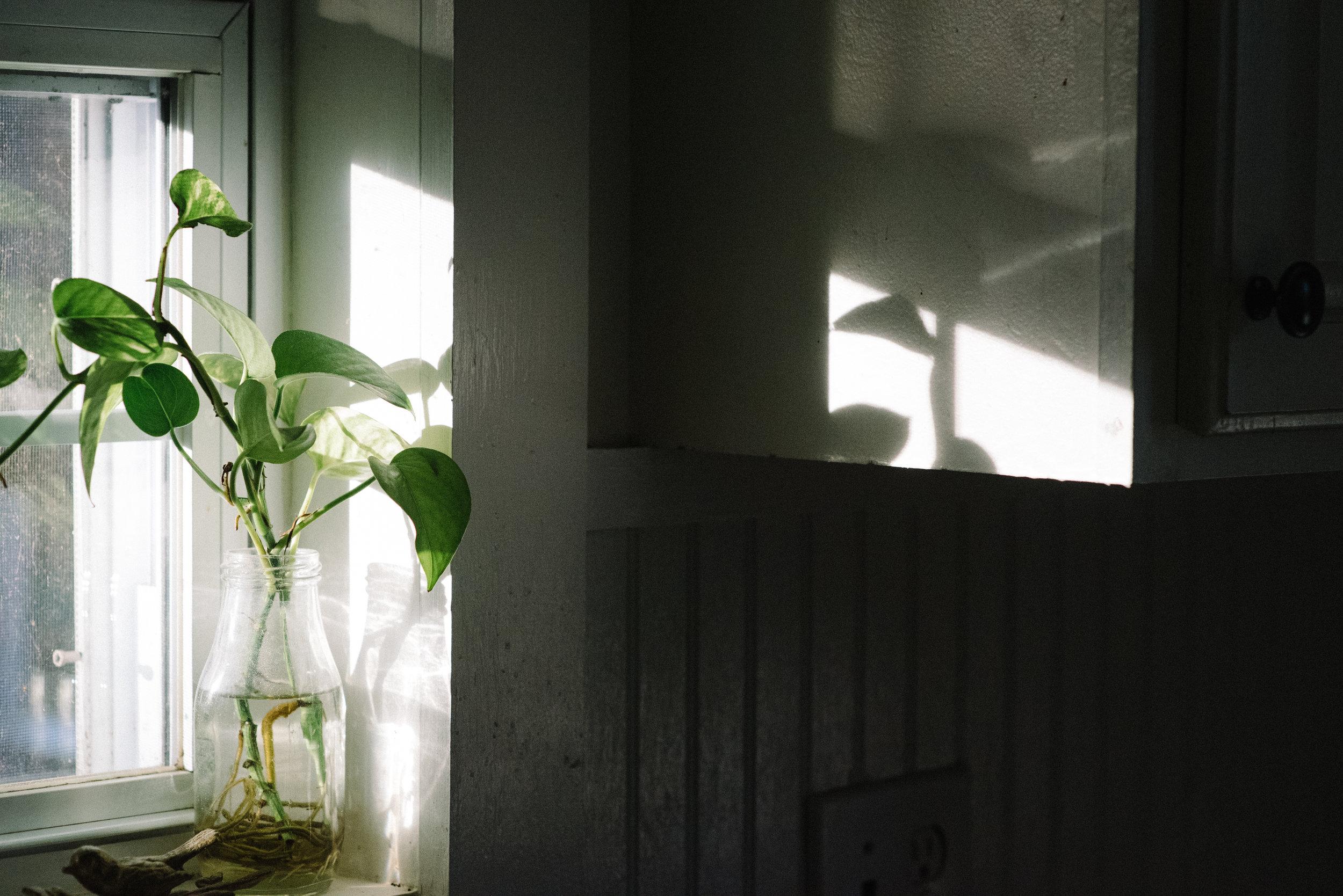 shadow and light-3.jpg