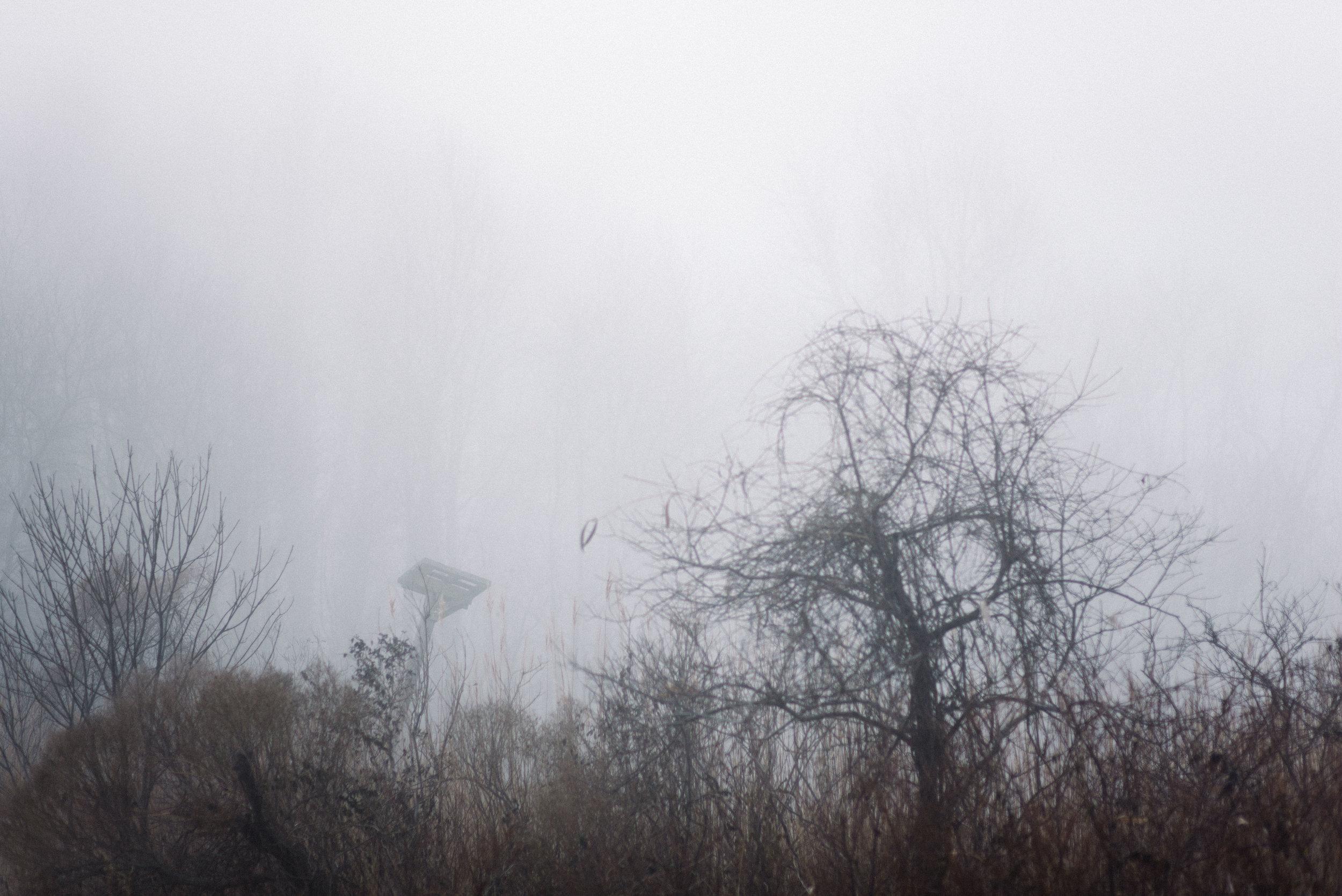 foggy beach-3.jpg