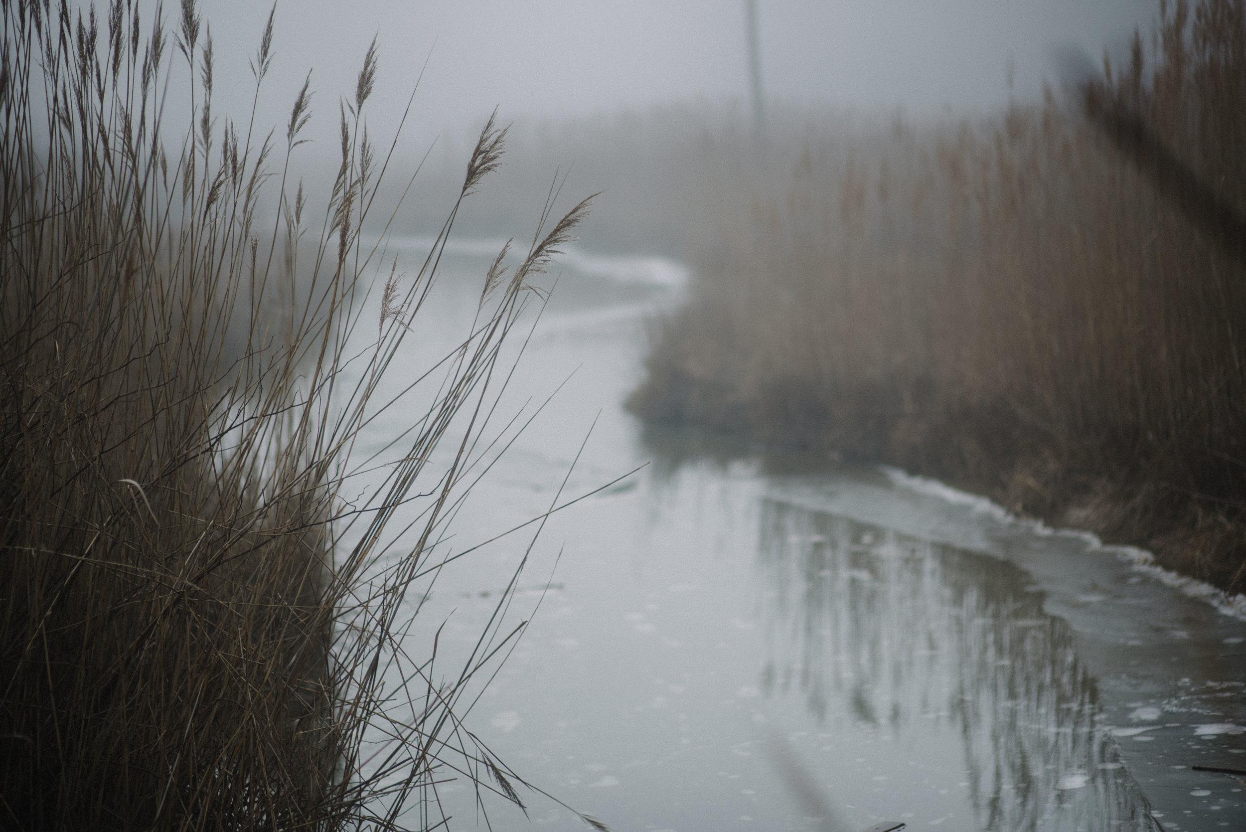 foggy beach-4.jpg