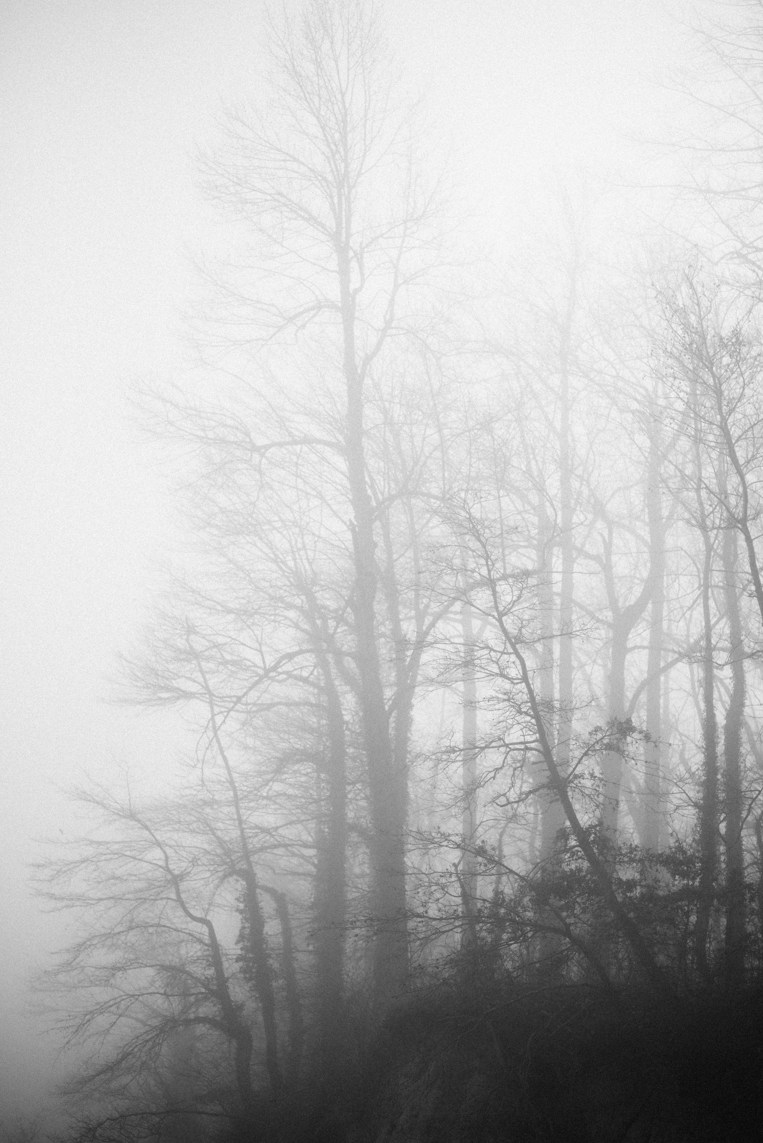 foggy beach-8.jpg