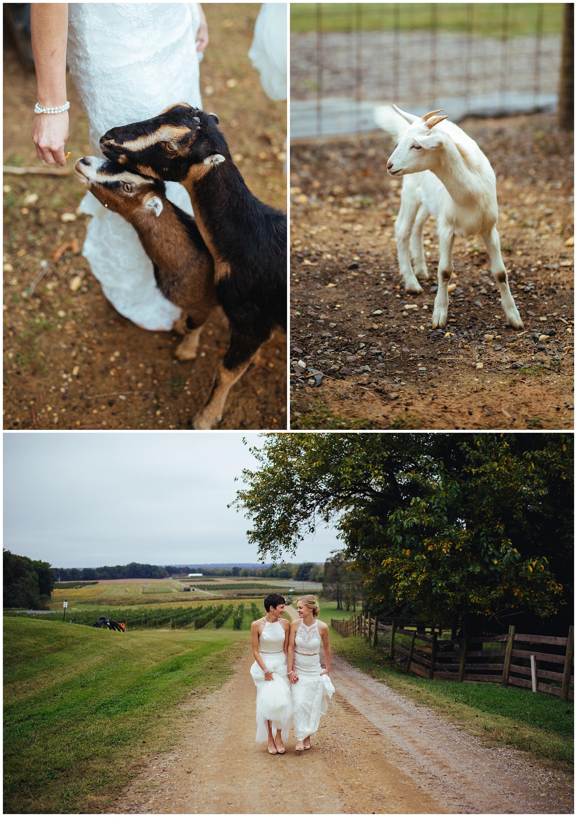 Lesbian-Farm-Wedding11.jpg