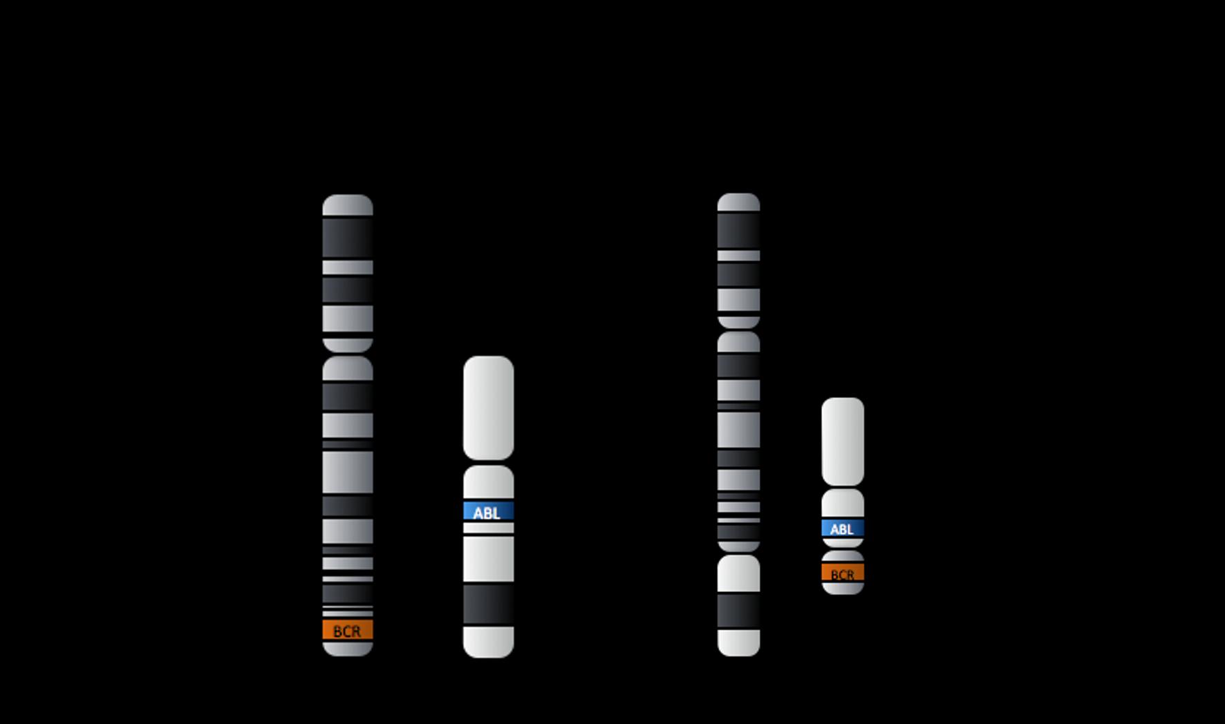 CML kromoszómák.png