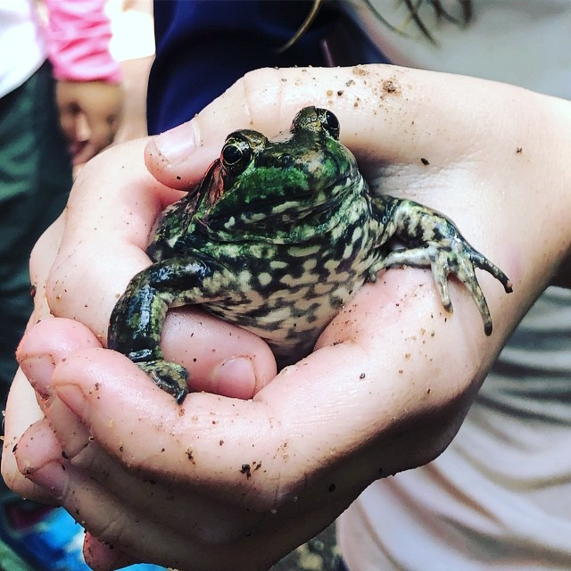 """""""Frog alert!""""✨✨✨ When a nature find is made the kids call out """"alert, alert"""" and the whole pack of kids run over and gather round. The excitement is palpable!! #forestschool #forestcamp #forestplay #playwork #childledlearning"""