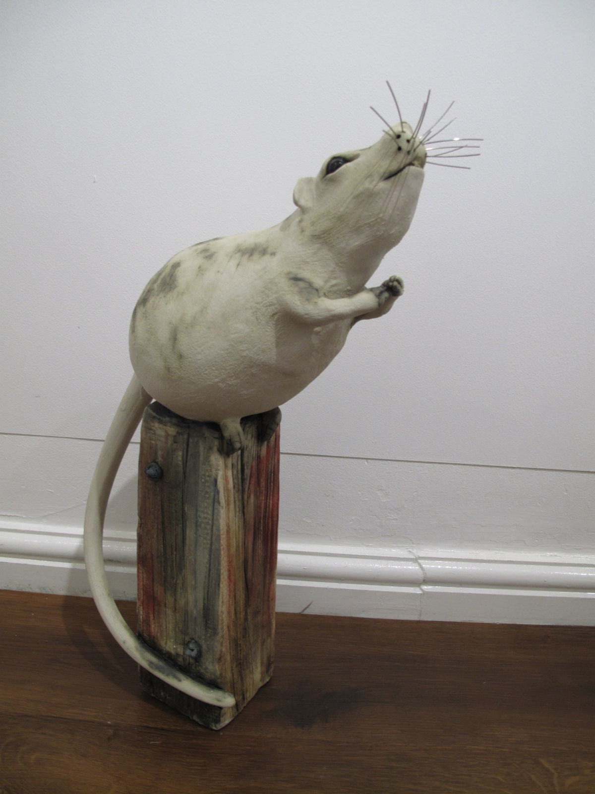 Roy the Rat
