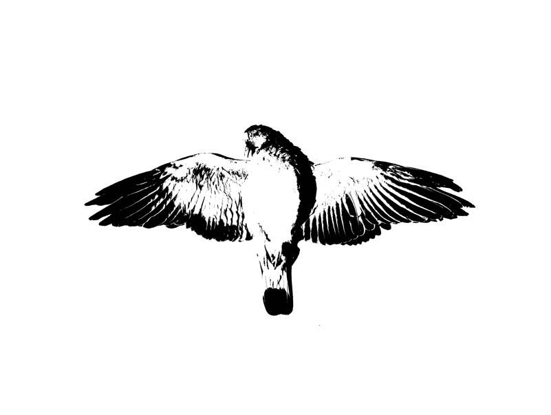 Lauren McGregor : Strong Urge to Fly