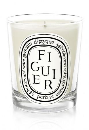 hf_c_figuier_fig-tree_fruity.jpg