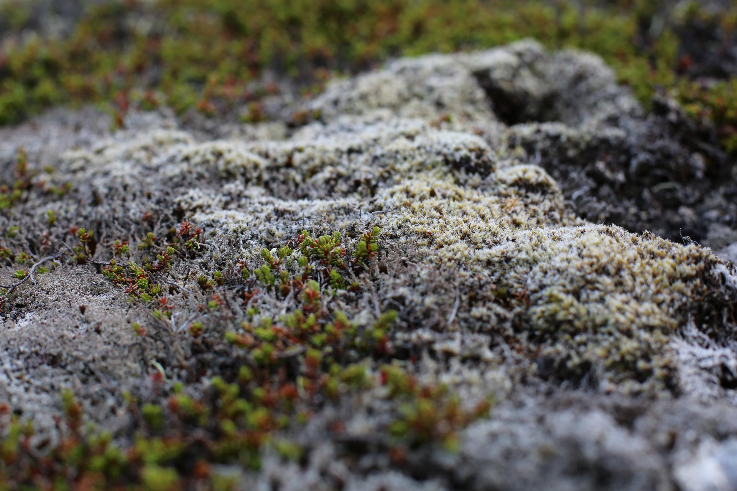 Iceland_moot-17.jpg
