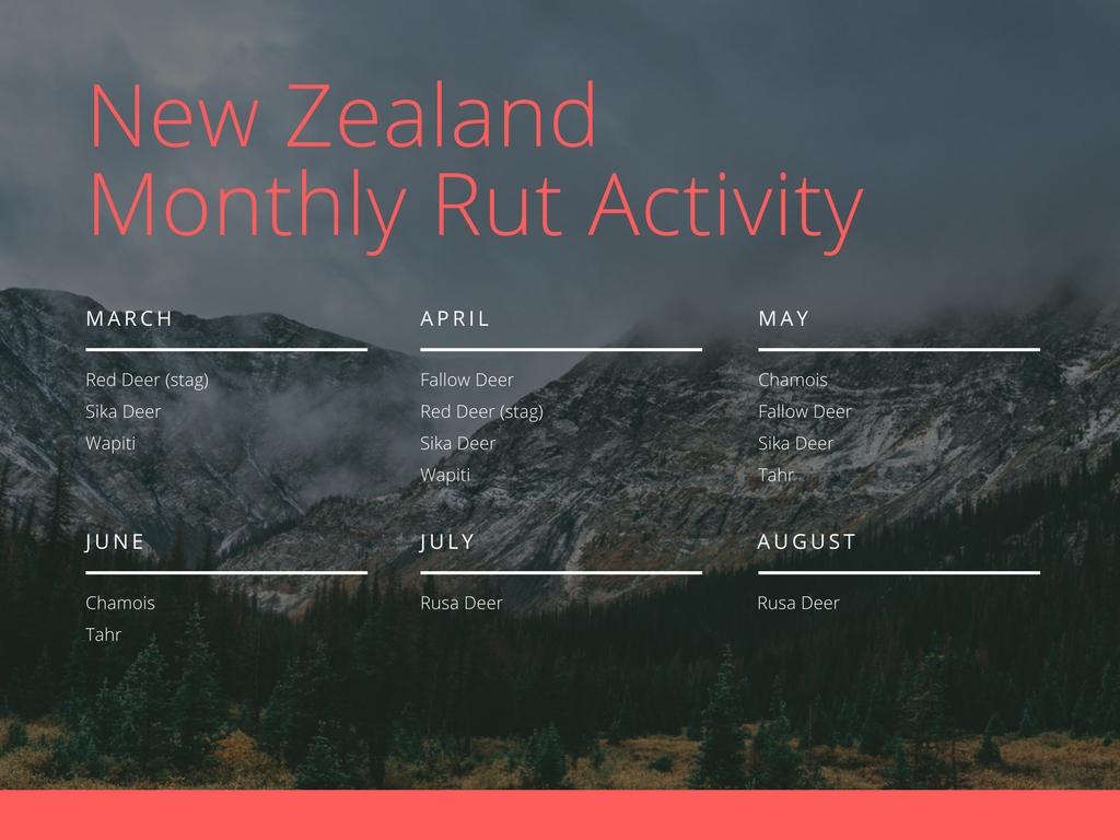 New-Zealand-Rut.jpg