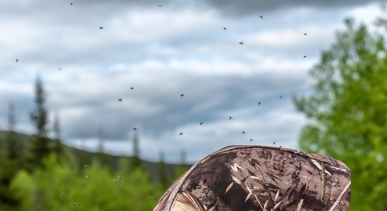 Newfoundland+Black+Flies