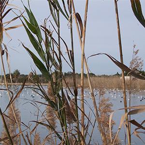 Nature Salento Sud-Est Apulia Puglia