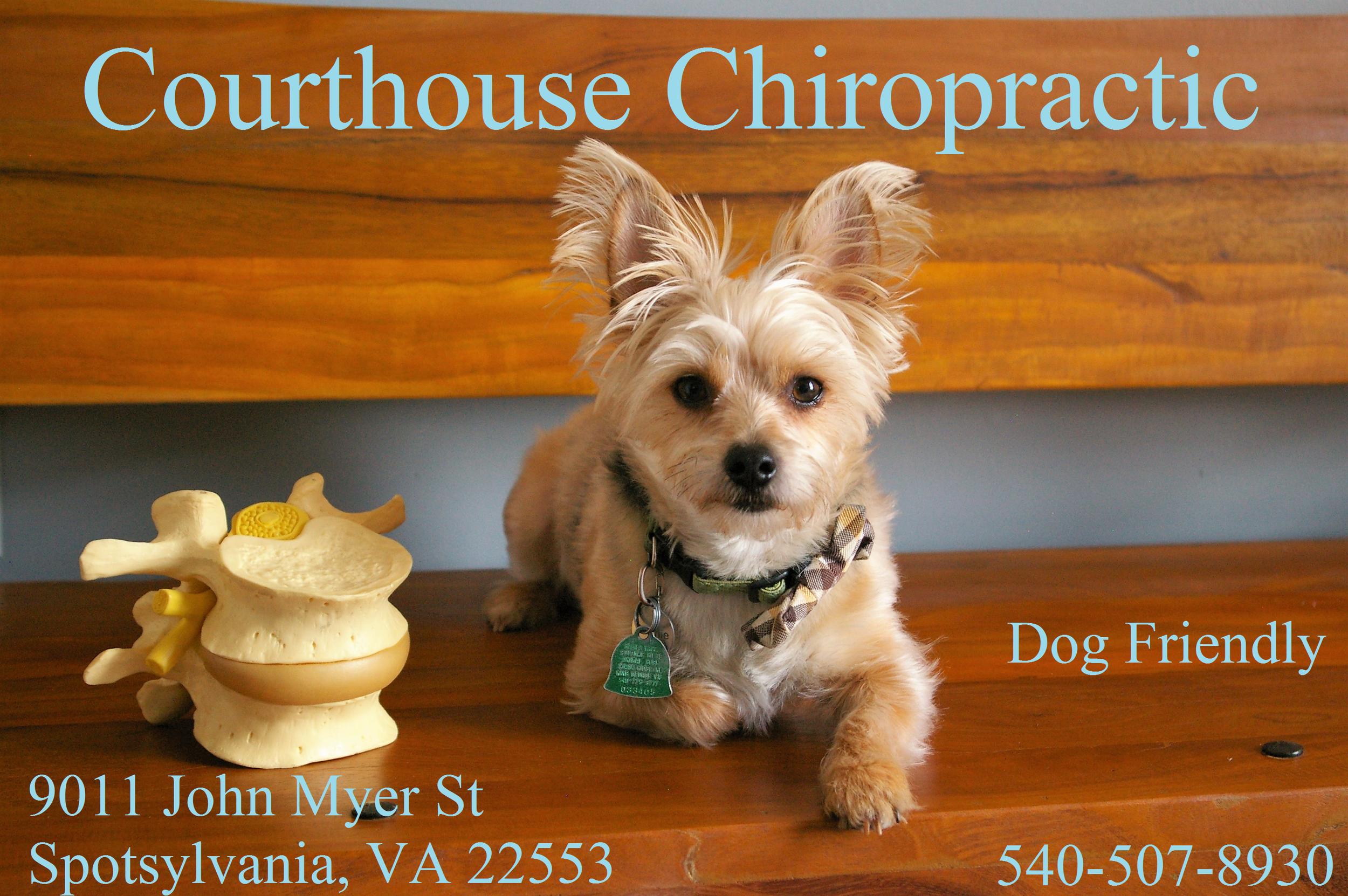 spotsylvania chiropractor dog friendly