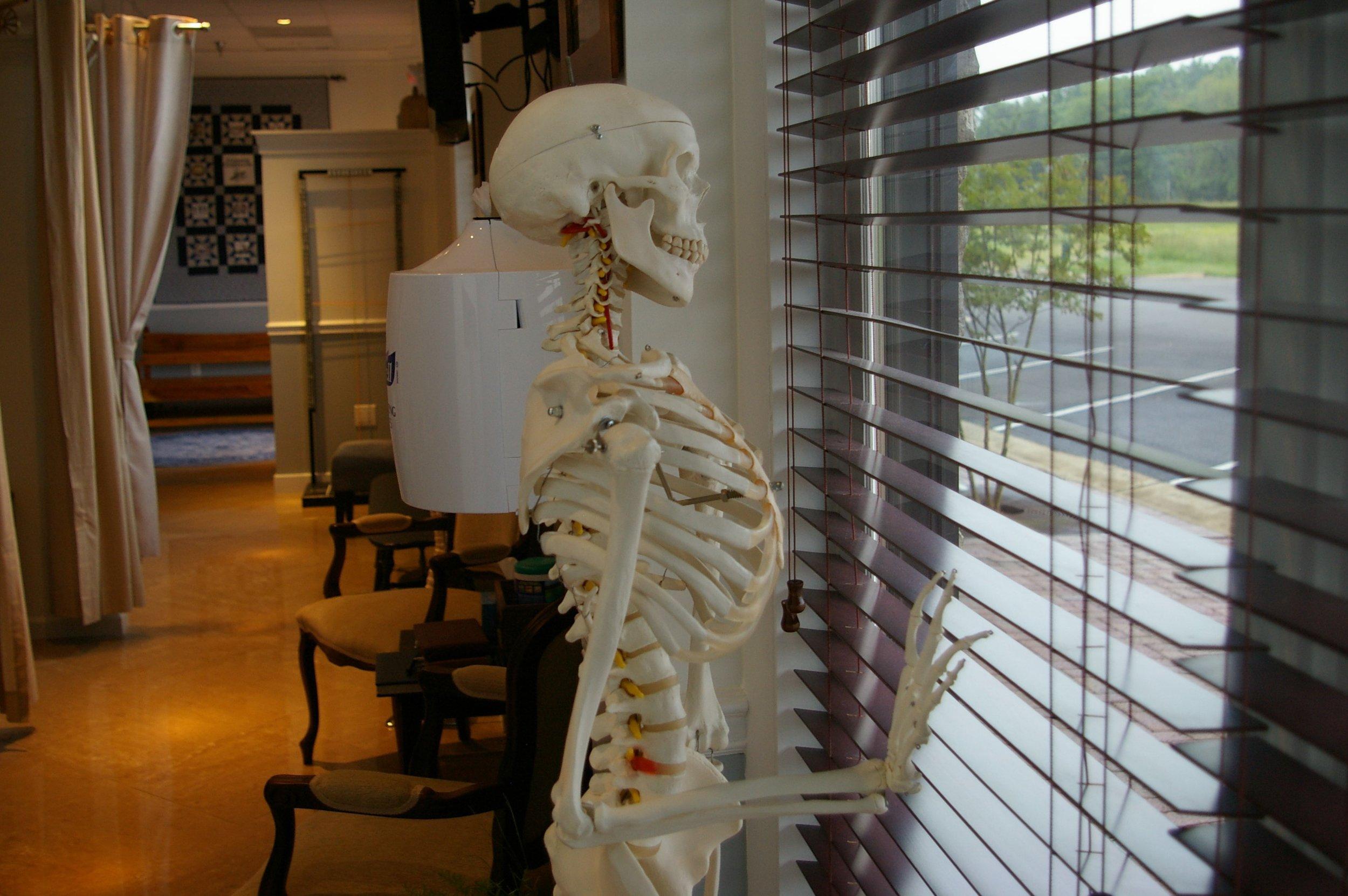 spotsylvania chiropractor fredericksburg chiropractor skeleton