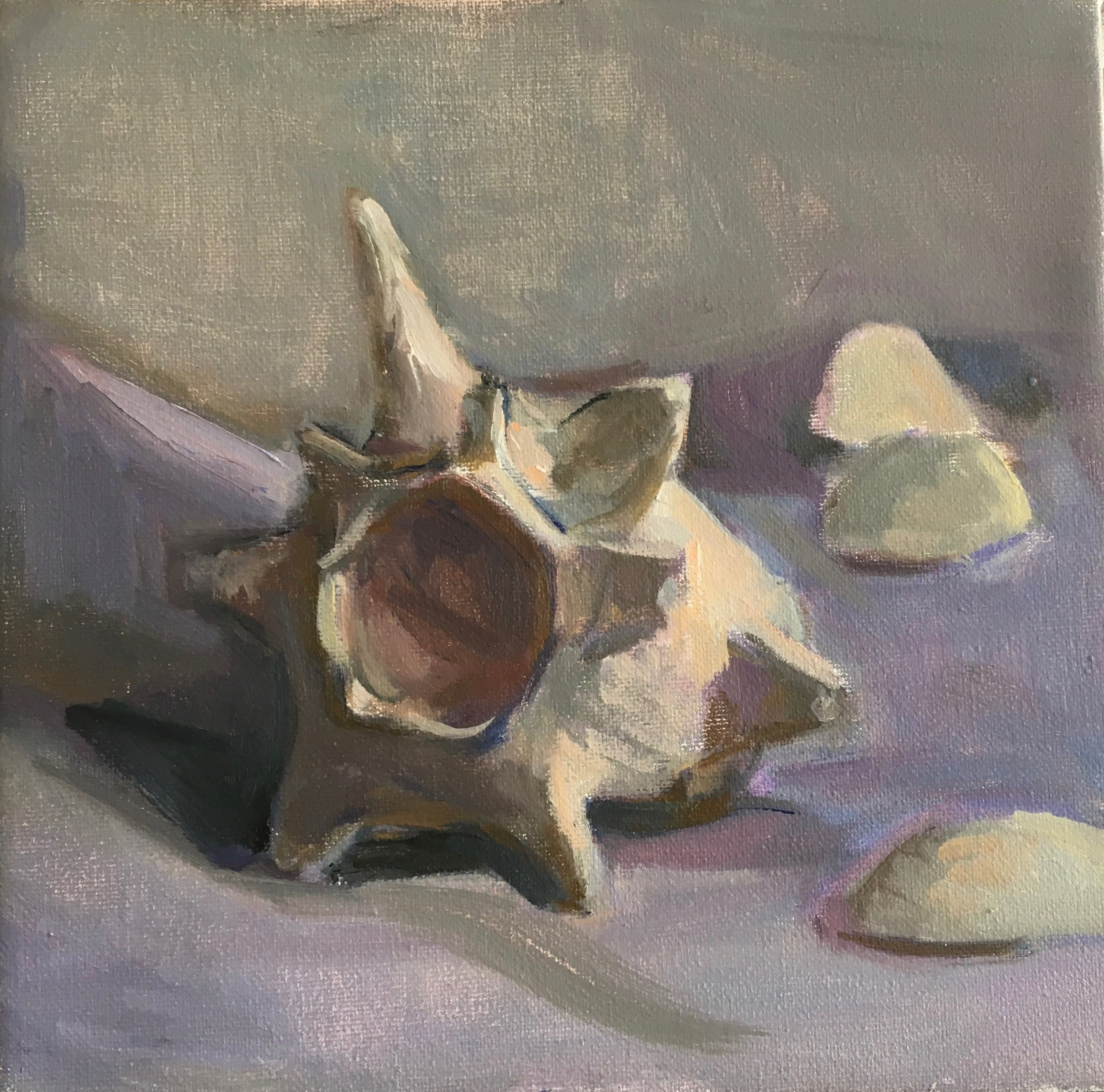 Shell on purple cloth