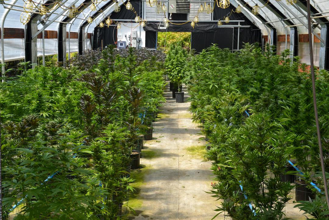 KindConnection Blog — KindPeoples Recreational Cannabis