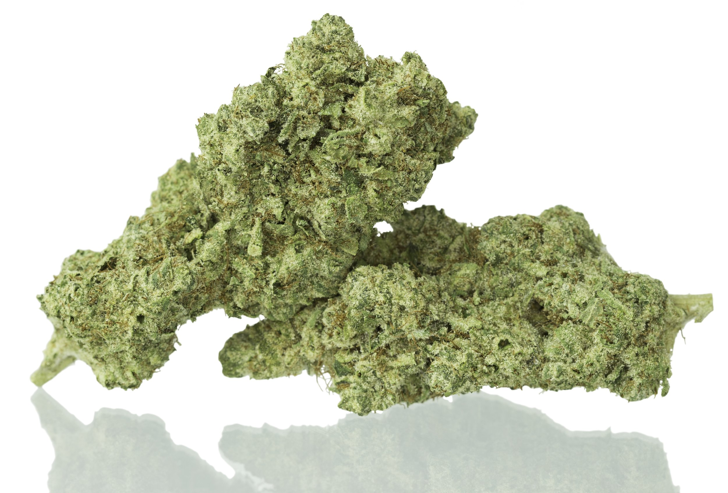 Ogre OG is incredibly pungent strain with gassy, earthy flavors.