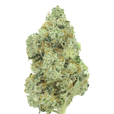 Grown by the veterans at SCVA, Kosher Kush is the heaviest of the heavy-hitters. -