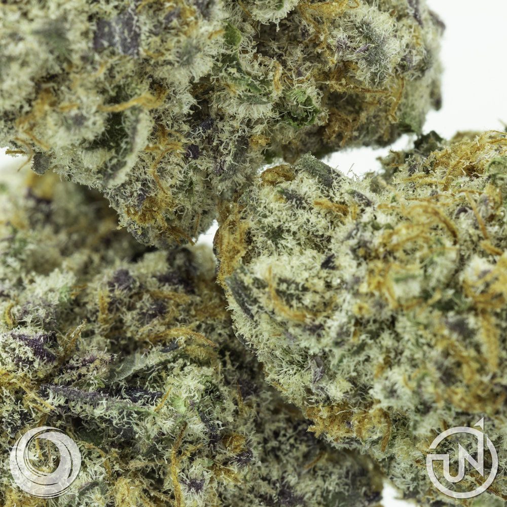 Purple_Punch_UpNorth_Trichomes_070318.jpg
