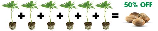 Six_Clones_half-off_Seeds_graphic.jpg