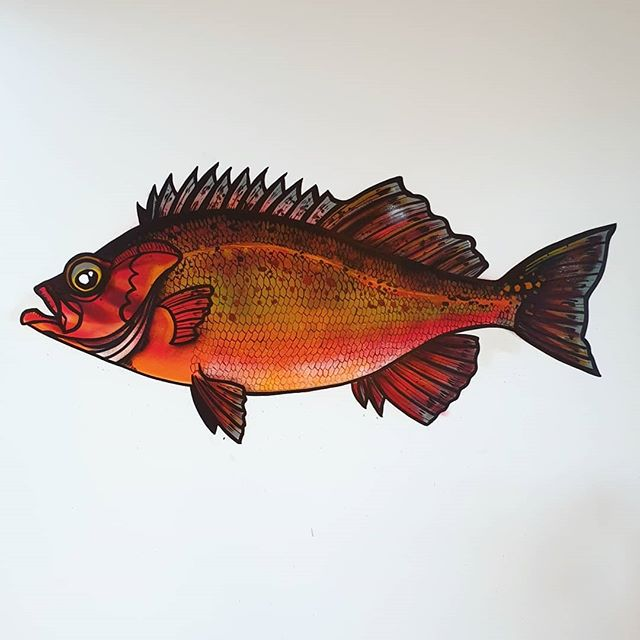 Bank Rockfish. Swipe to see the painting proces! Aka Rocote Rojo.165x90 cm. (5.6 x 3.5 ft) Painted in the house of a lovely Mexican / Dutch couple that needed a little bit of Mexican color in their house to feel less home sick. #bankrockfish #rocoterojo #sebastesrufus #fishart #mural #mtnpaint #mtncolors #montanacolors