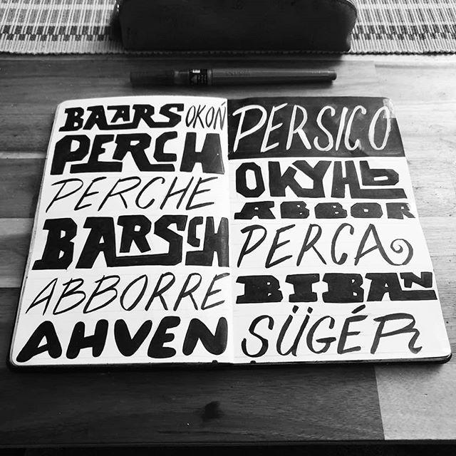 Sketchbook. #baars #okoń #perch #perche #barsch #aborre # ahven #persico #окунь #abbor #perca #biban #sügér