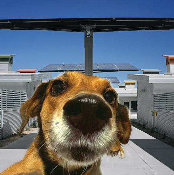 ANIMAL CAMPUS DOG ADOPTION PARK