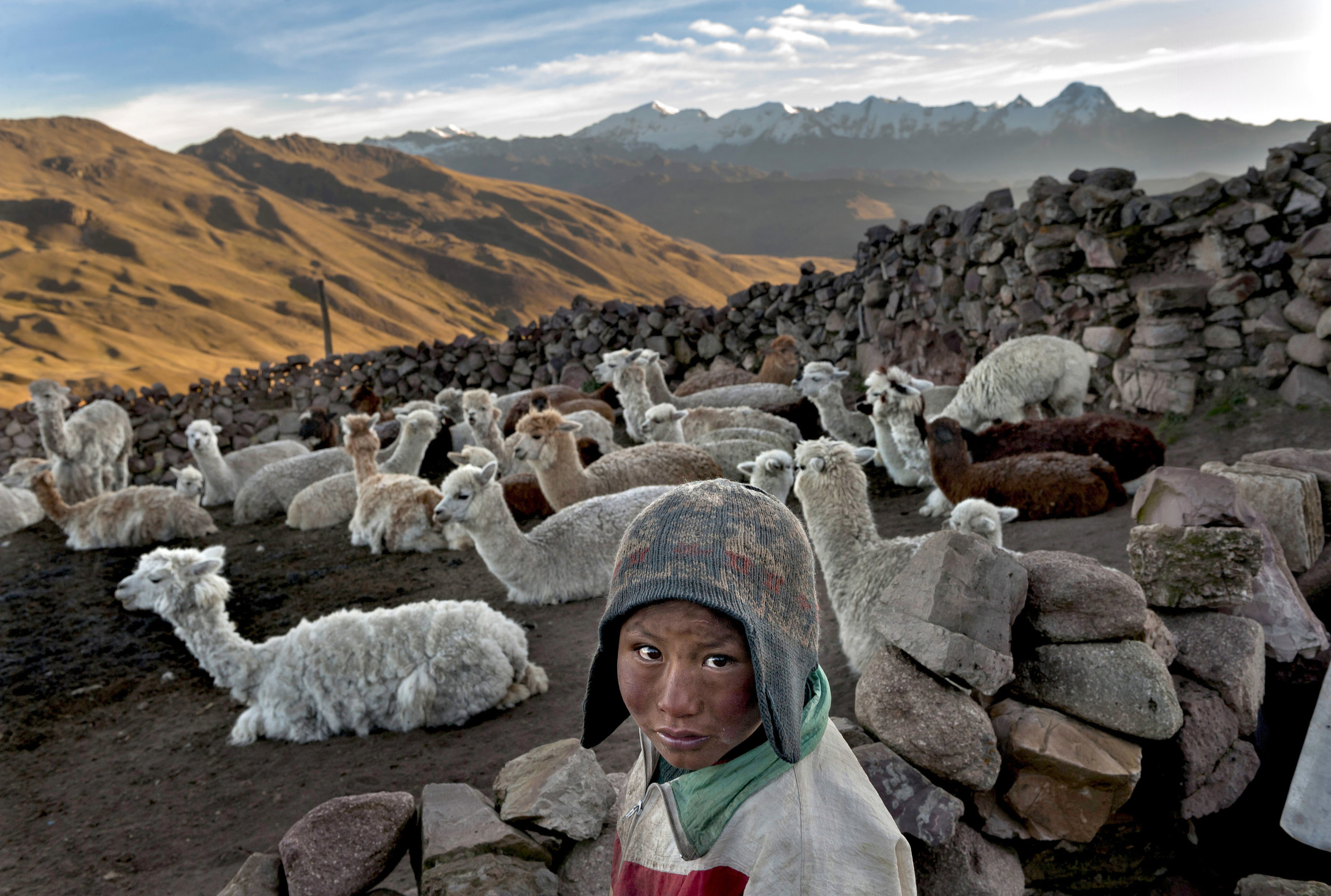 CHILD HERDER IN BOLIVIA - Following the death of his father, Alvaro Kalancha Quispe, 9, helps his family survive by herding. He opens the gate to the stone pen that holds the family's alpacas and llamas each morning so they can graze throughout the hillsides during the day. He then heads off to school, but must roundup the animals in the evening, in the Akamani mountain range of Bolivia.