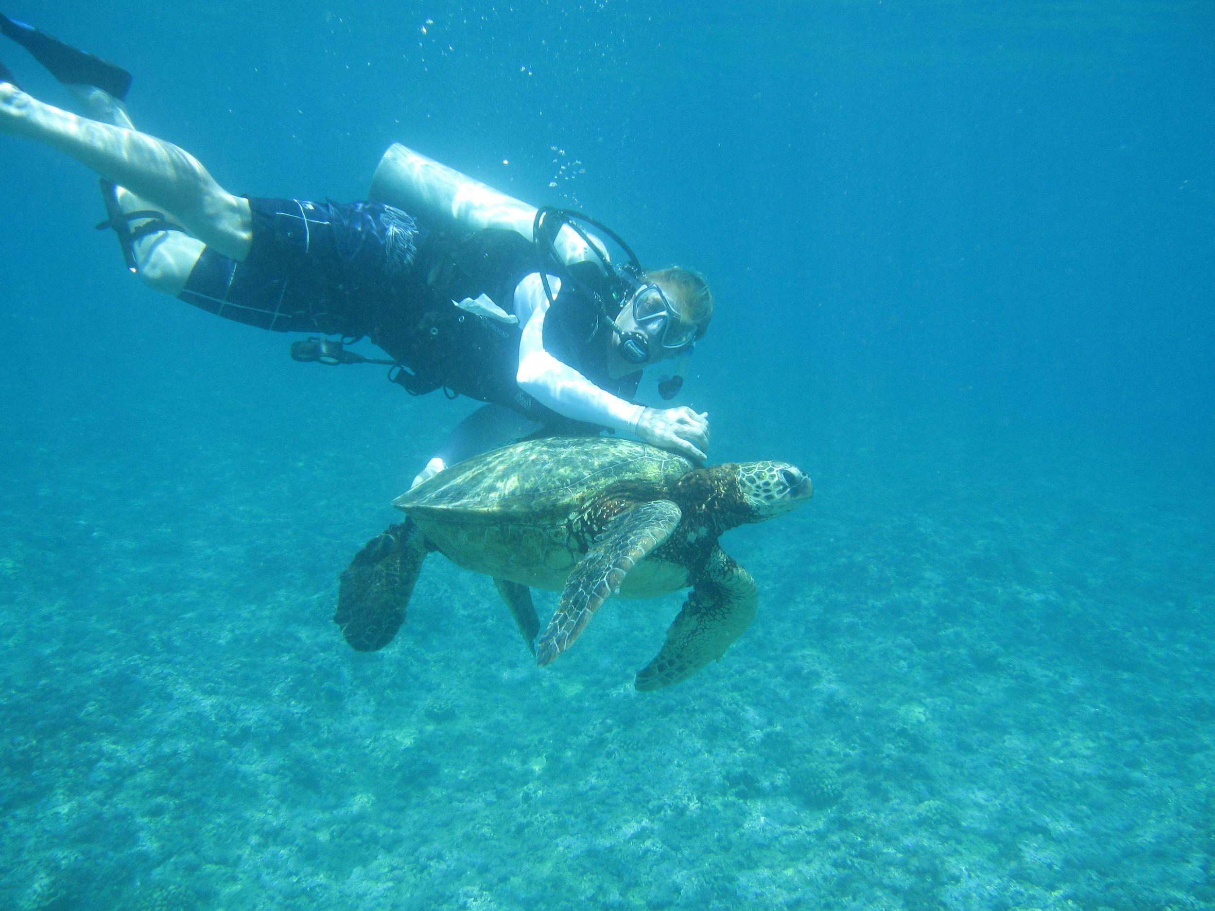 Kauai turty.jpg