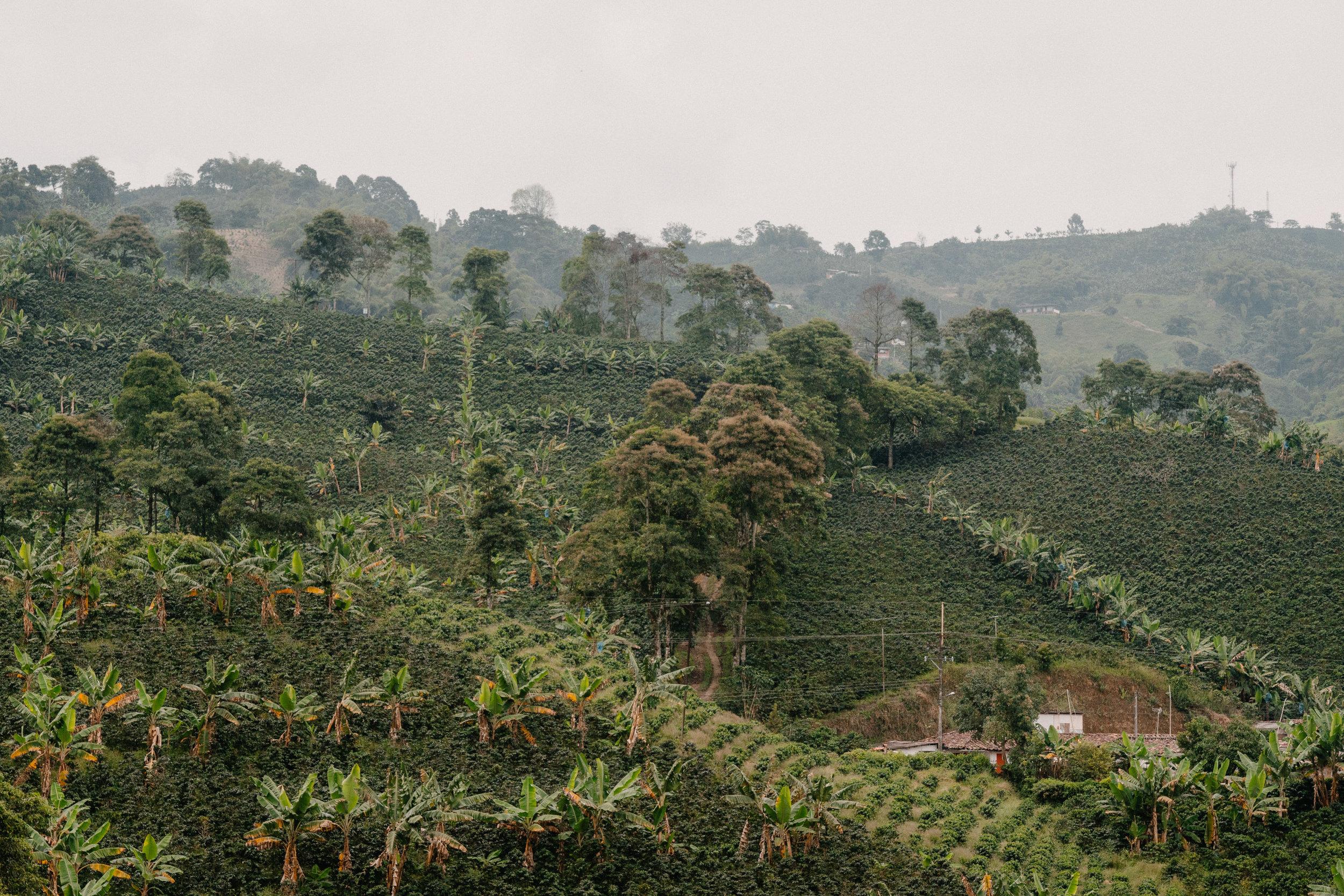 Emanuel-Hahn-Colombia-Coffee-Farmers-Huila-Manizales-Pagpropina-2.jpg