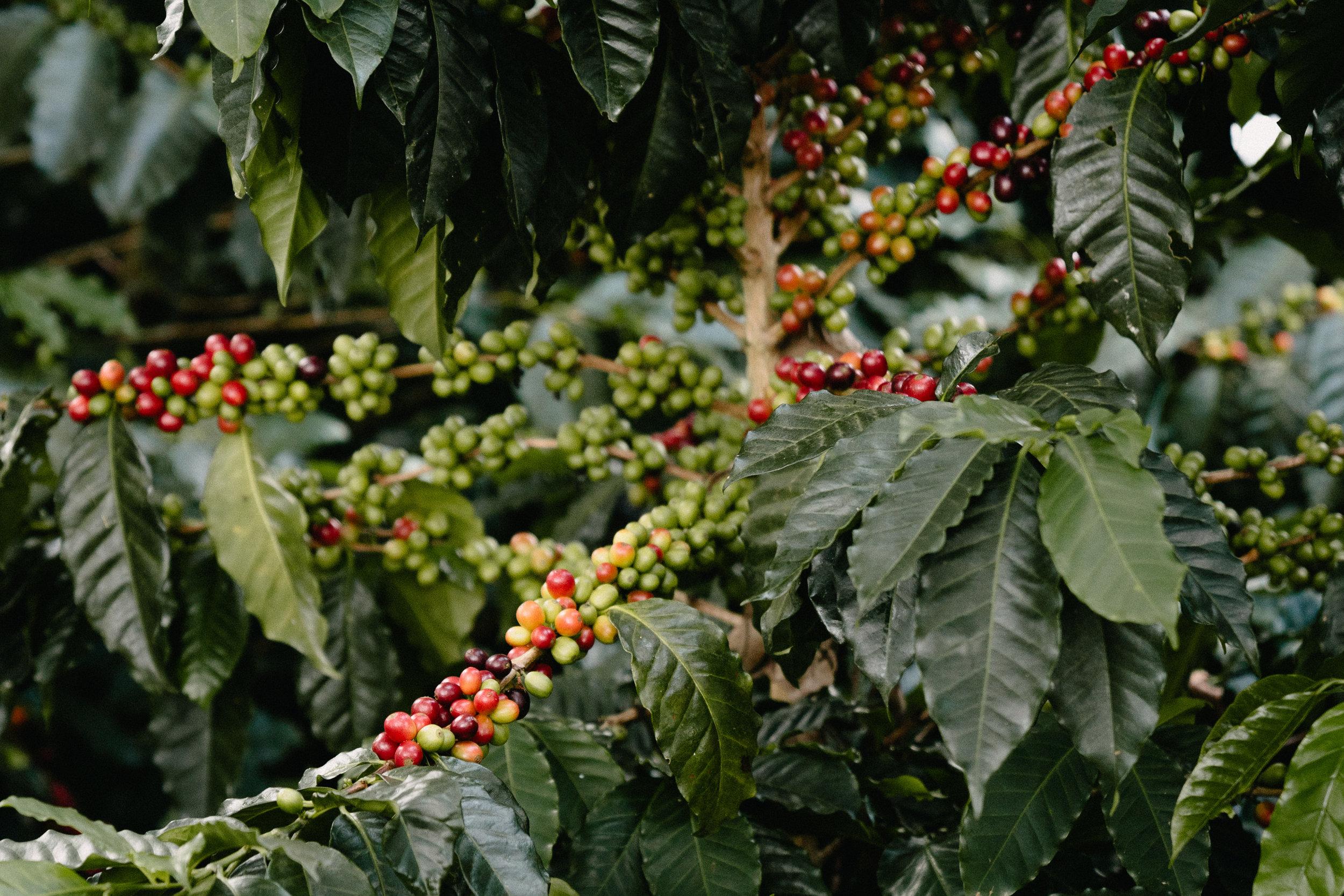 Emanuel-Hahn-Colombia-Coffee-Farmers-Huila-Manizales-Pagpropina-3.jpg