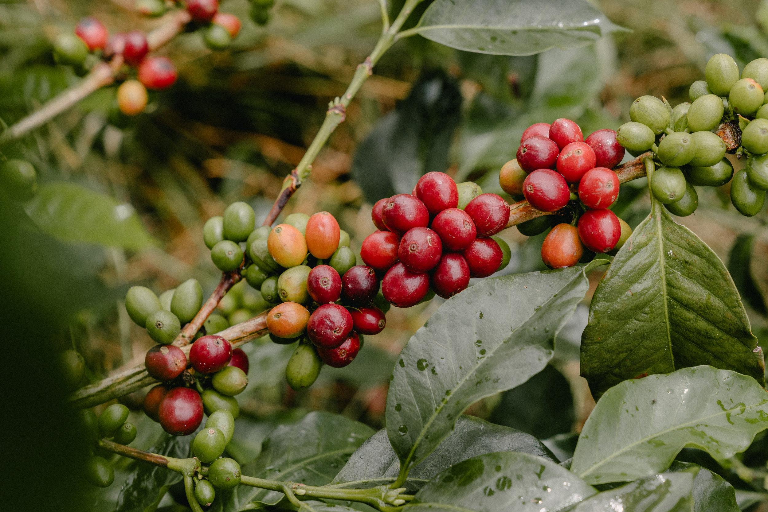 Emanuel-Hahn-Colombia-Coffee-Farmers-Huila-Manizales-Pagpropina-4.jpg