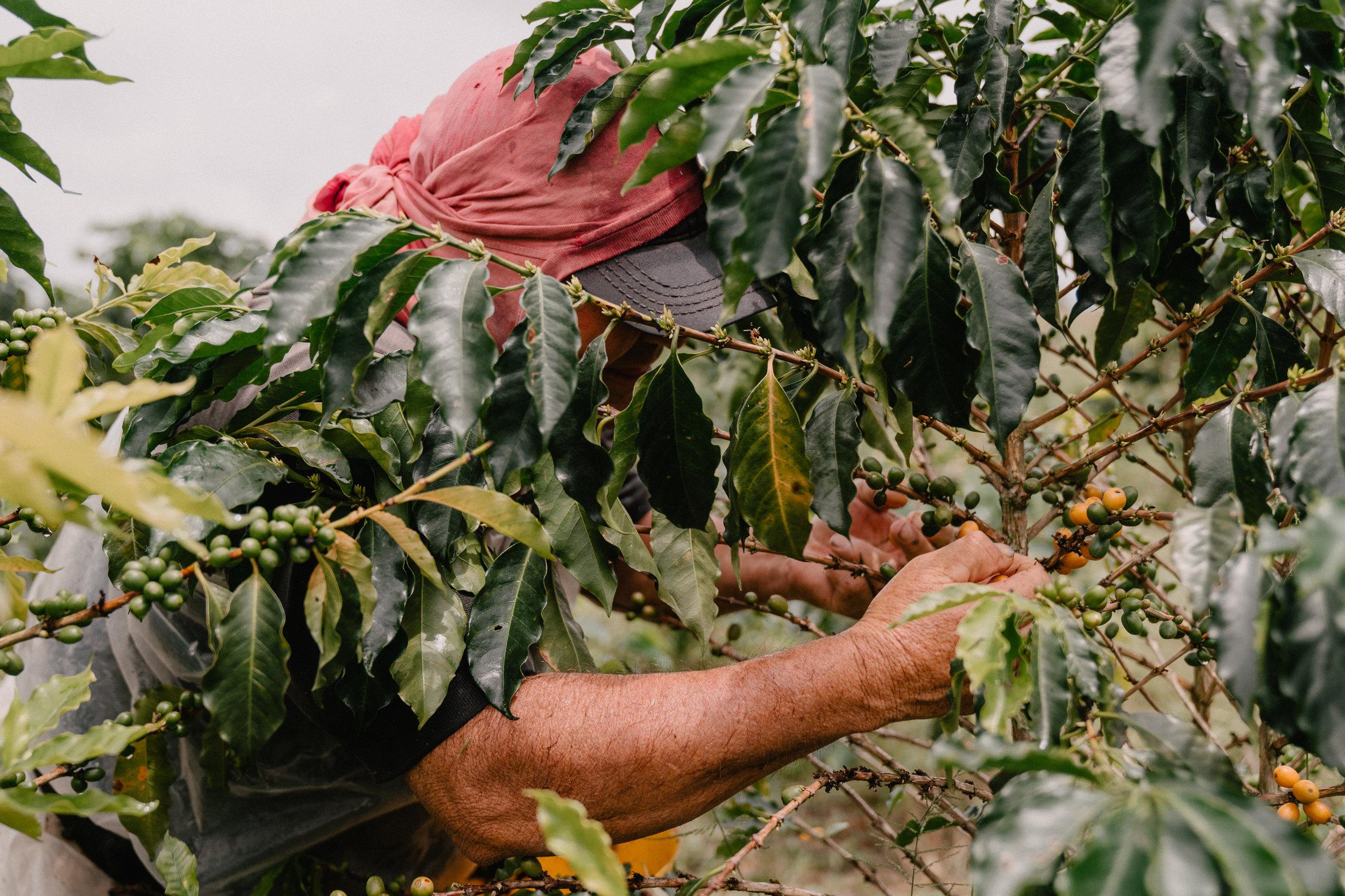 Emanuel-Hahn-Colombia-Coffee-Farmers-Huila-Manizales-Pagpropina-5.jpg