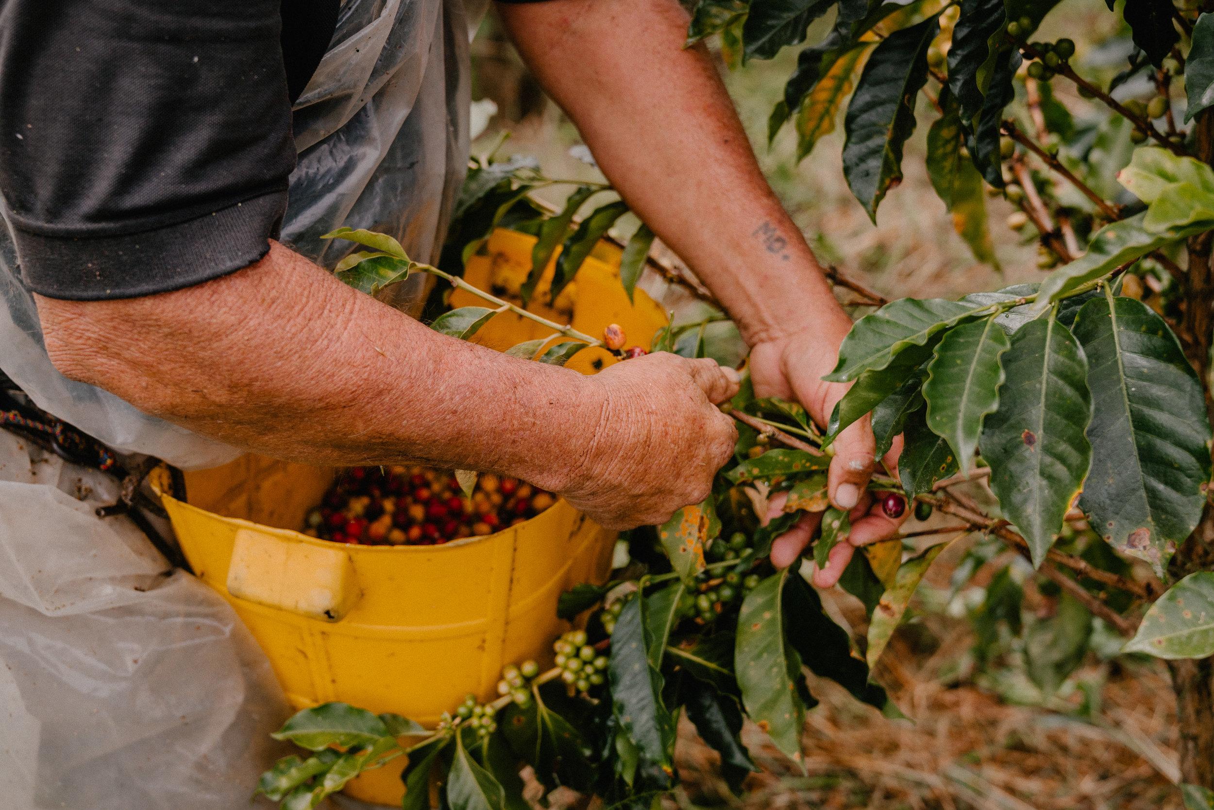 Emanuel-Hahn-Colombia-Coffee-Farmers-Huila-Manizales-Pagpropina-7.jpg