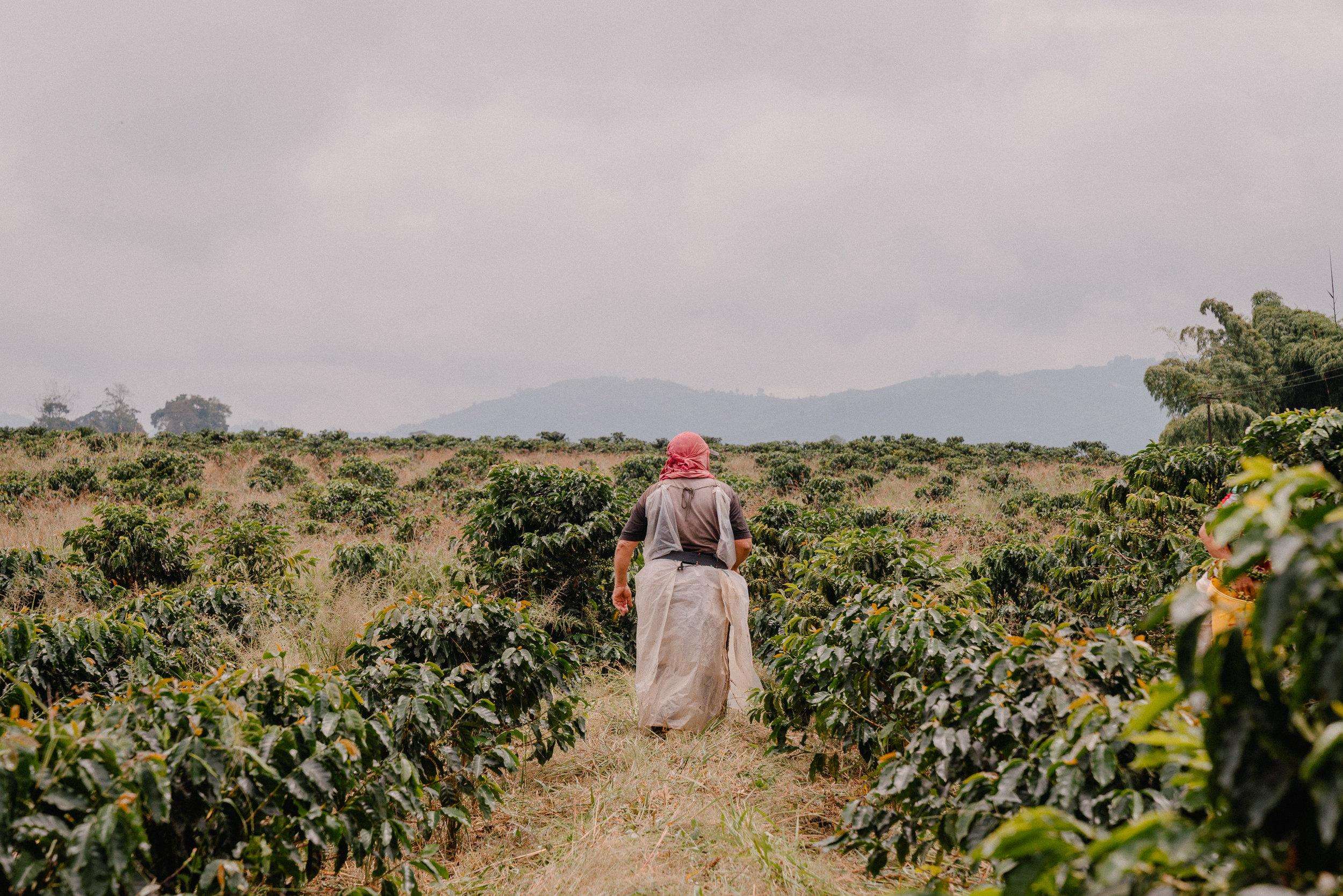 Emanuel-Hahn-Colombia-Coffee-Farmers-Huila-Manizales-Pagpropina-10.jpg