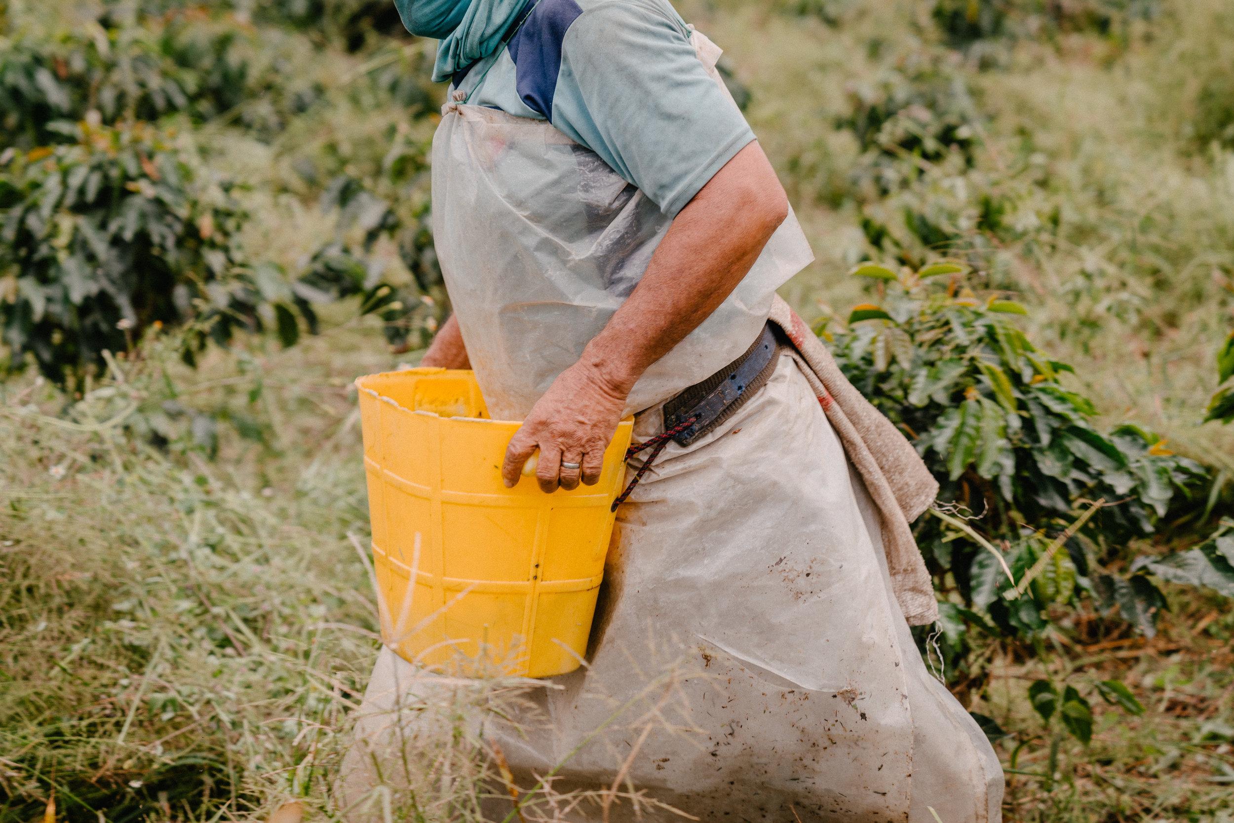 Emanuel-Hahn-Colombia-Coffee-Farmers-Huila-Manizales-Pagpropina-12.jpg