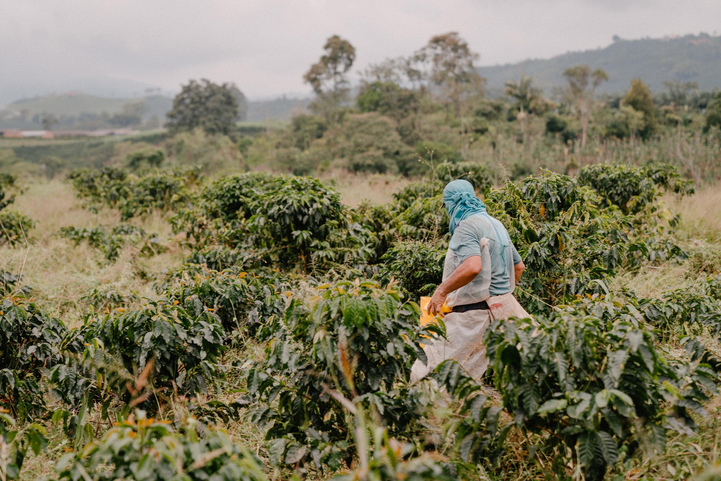 Emanuel-Hahn-Colombia-Coffee-Farmers-Huila-Manizales-Pagpropina-14.jpg