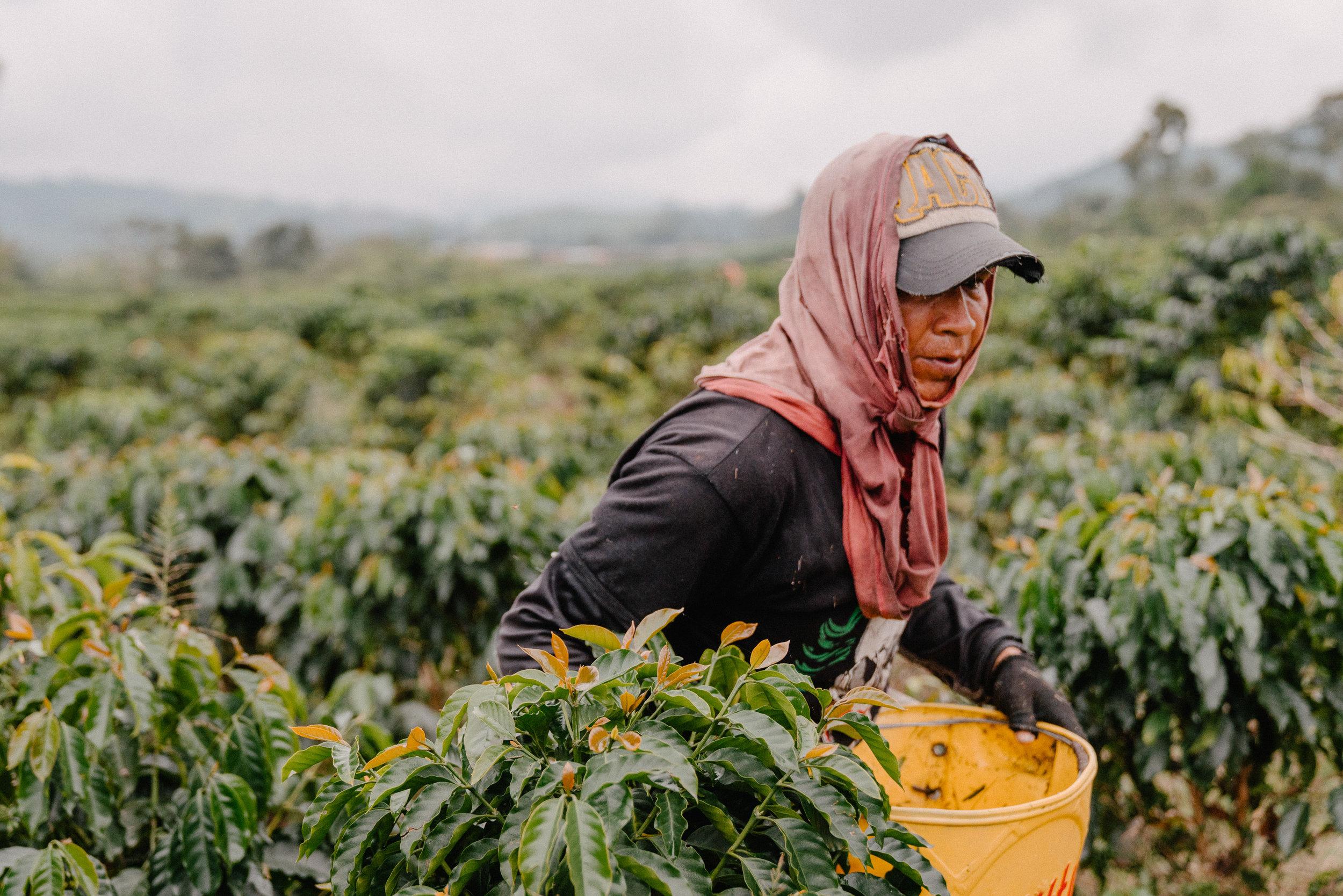 Emanuel-Hahn-Colombia-Coffee-Farmers-Huila-Manizales-Pagpropina-15.jpg
