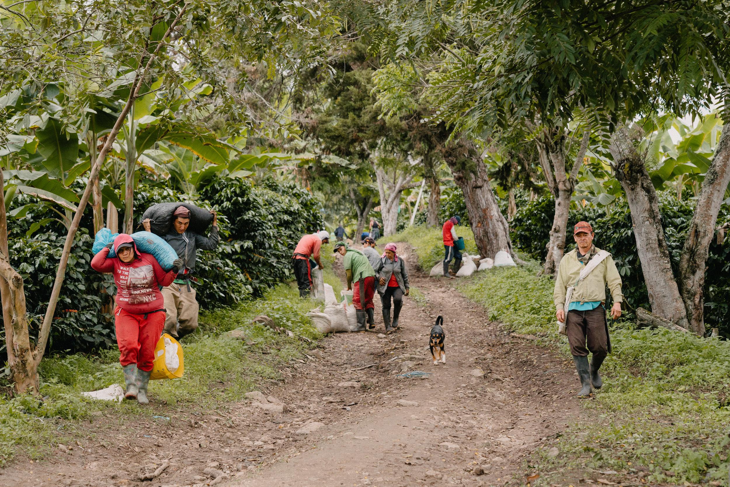 Emanuel-Hahn-Colombia-Coffee-Farmers-Huila-Manizales-Pagpropina-19.jpg