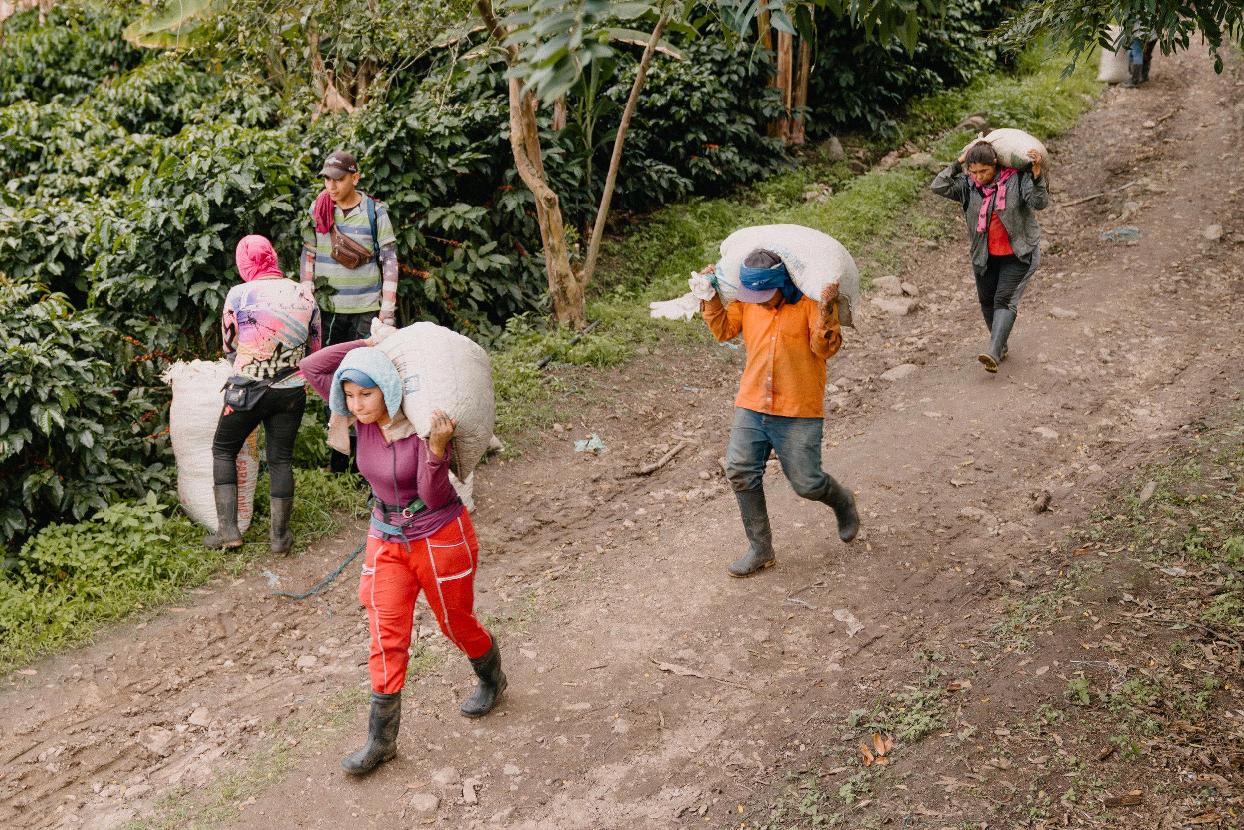 Emanuel-Hahn-Colombia-Coffee-Farmers-Huila-Manizales-Pagpropina-20.jpg