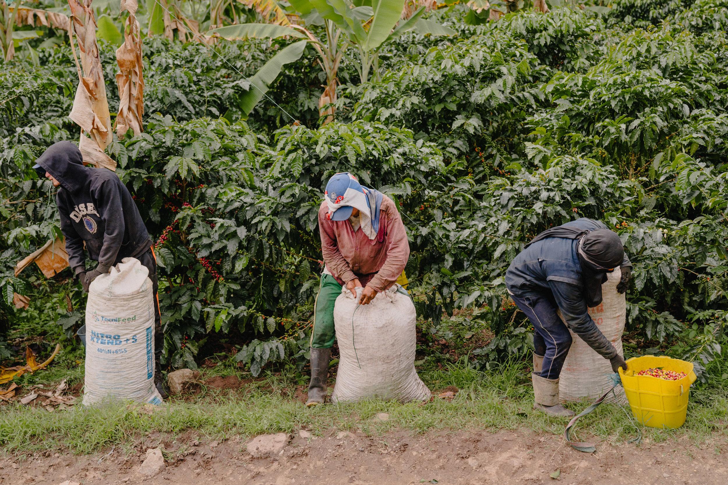 Emanuel-Hahn-Colombia-Coffee-Farmers-Huila-Manizales-Pagpropina-22.jpg