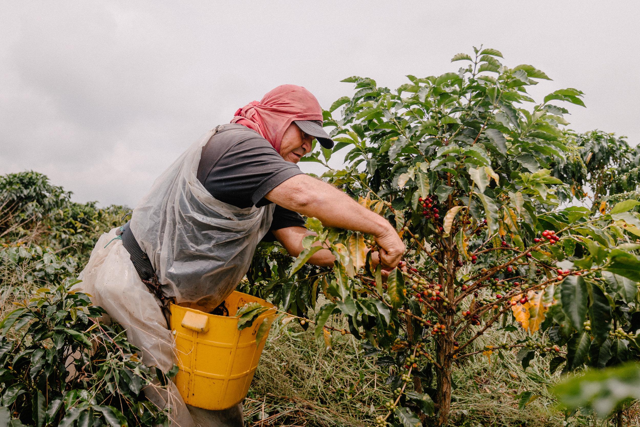Emanuel-Hahn-Colombia-Coffee-Farmers-Huila-Manizales-Pagpropina-6.jpg