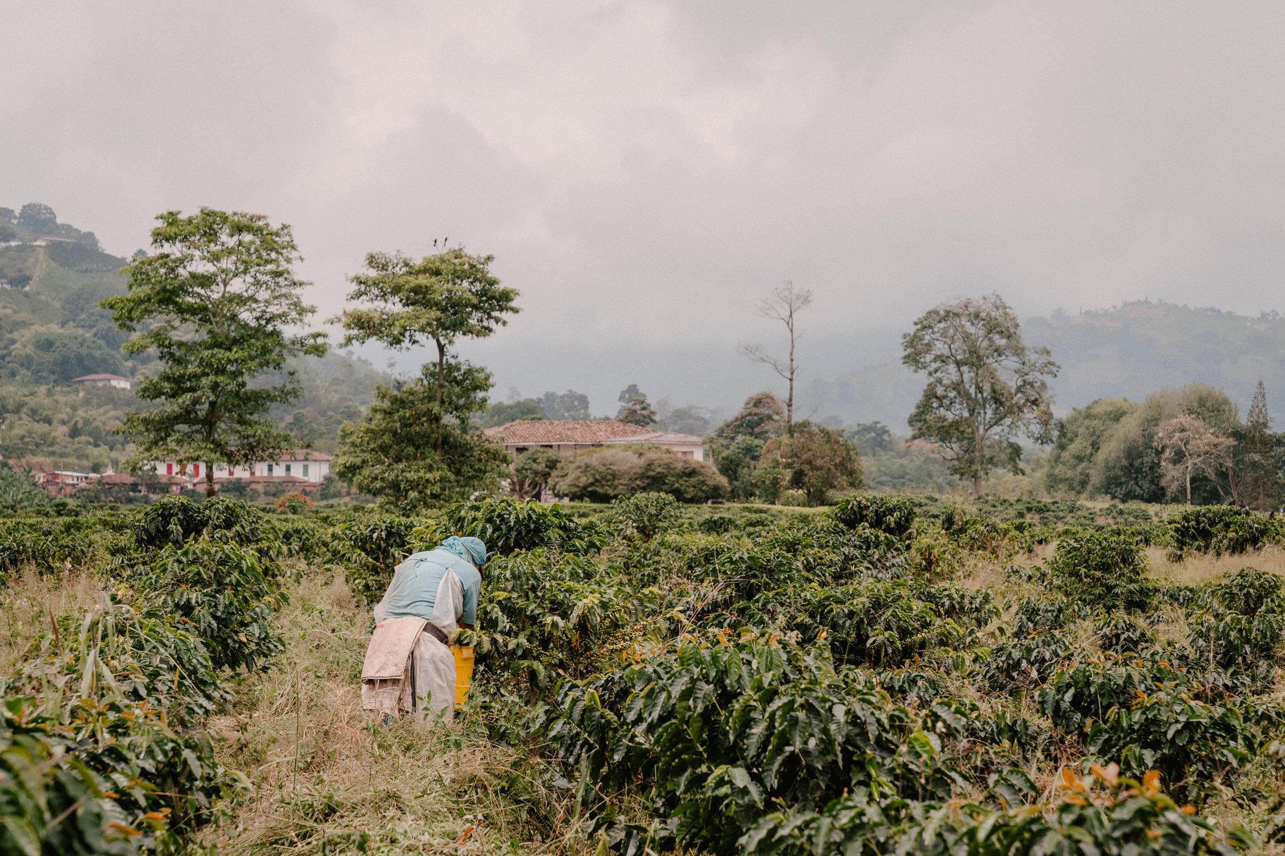 Emanuel-Hahn-Colombia-Coffee-Farmers-Huila-Manizales-Pagpropina-11.jpg