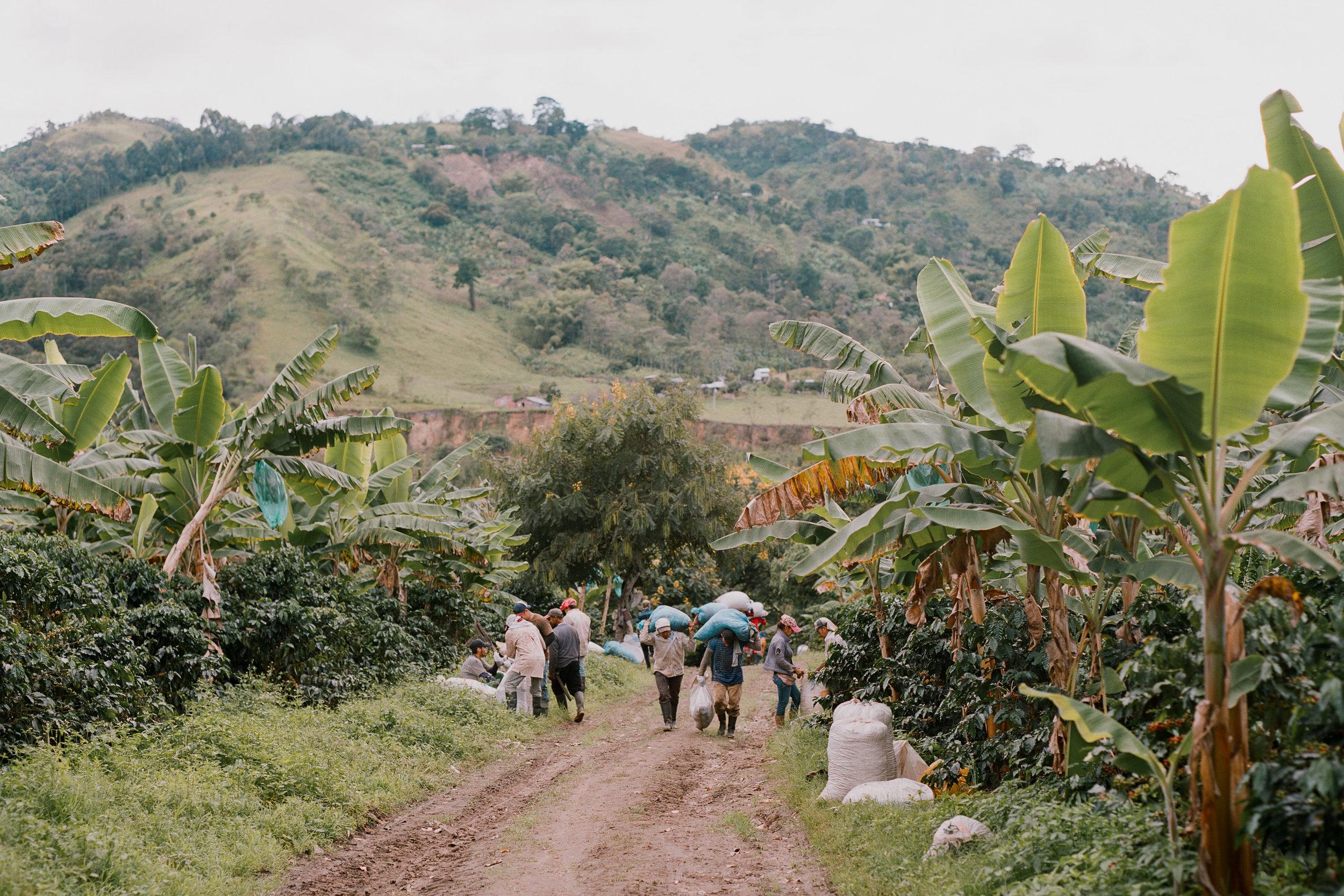 Emanuel-Hahn-Colombia-Coffee-Farmers-Huila-Manizales-Pagpropina-16.jpg