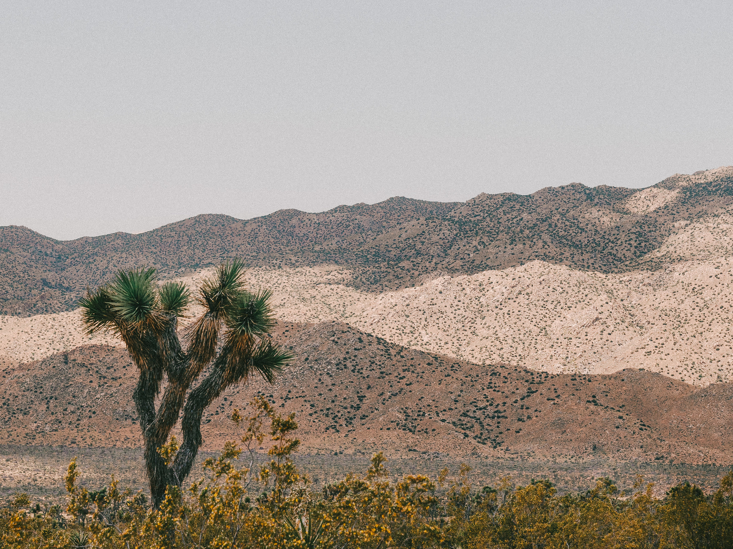 Joshua Tree National Park California Emanuel Hahn 1