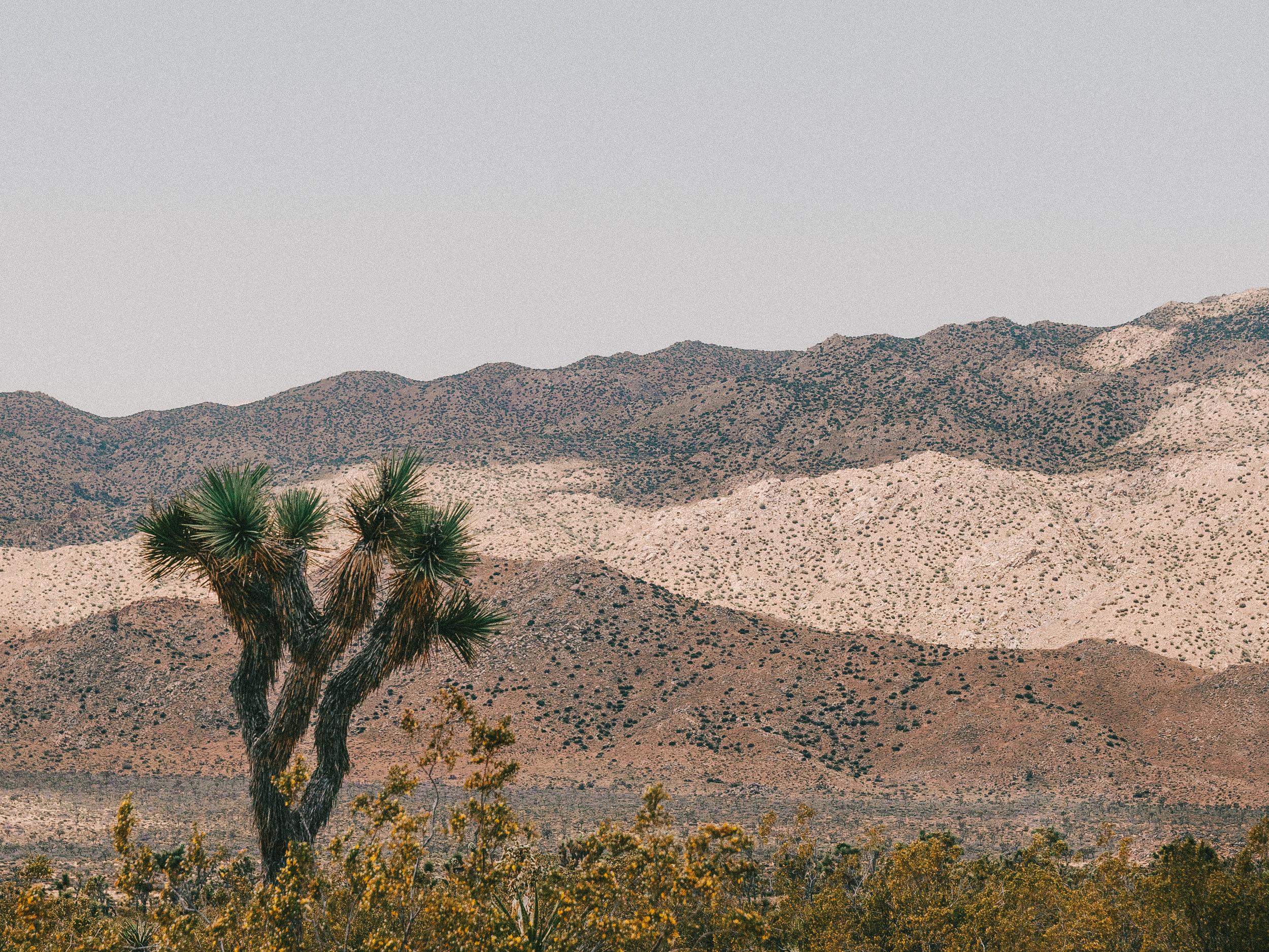 Joshua Tree National Park California Emanuel Hahn 1