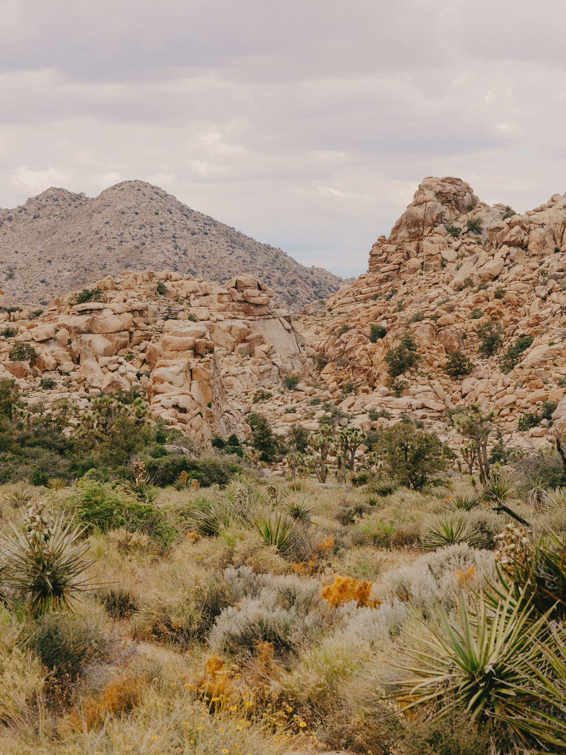 Joshua Tree National Park California Emanuel Hahn 3