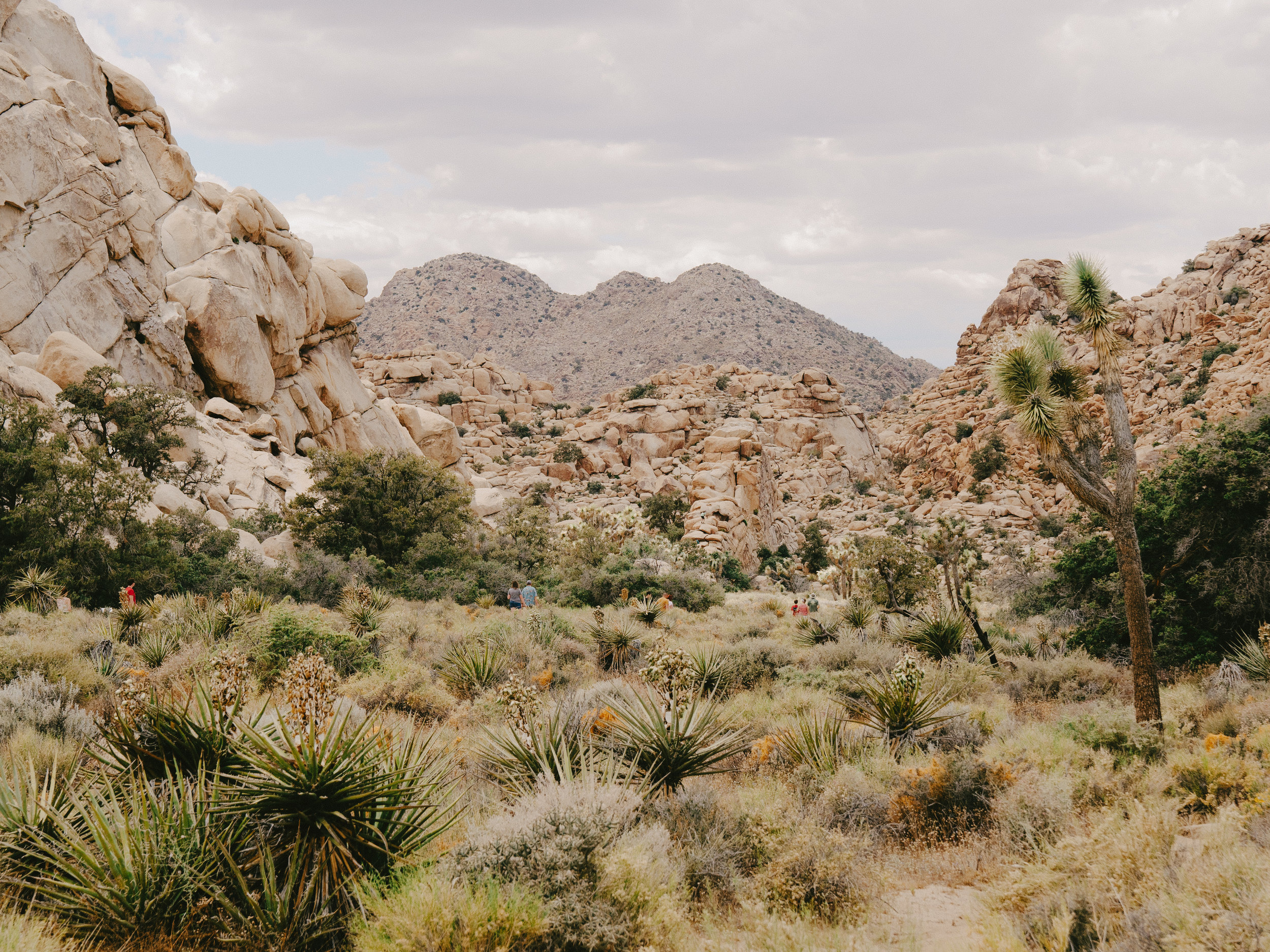 Joshua Tree National Park California Emanuel Hahn 4